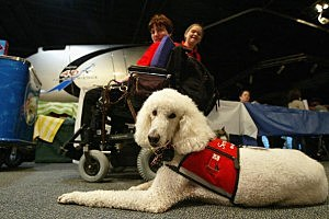 Rescue And Service Dog
