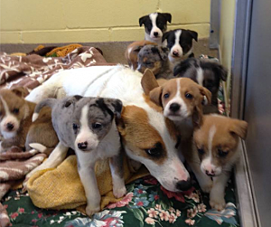 TR Puppies rescued