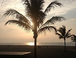 Jenks palm tree full photo