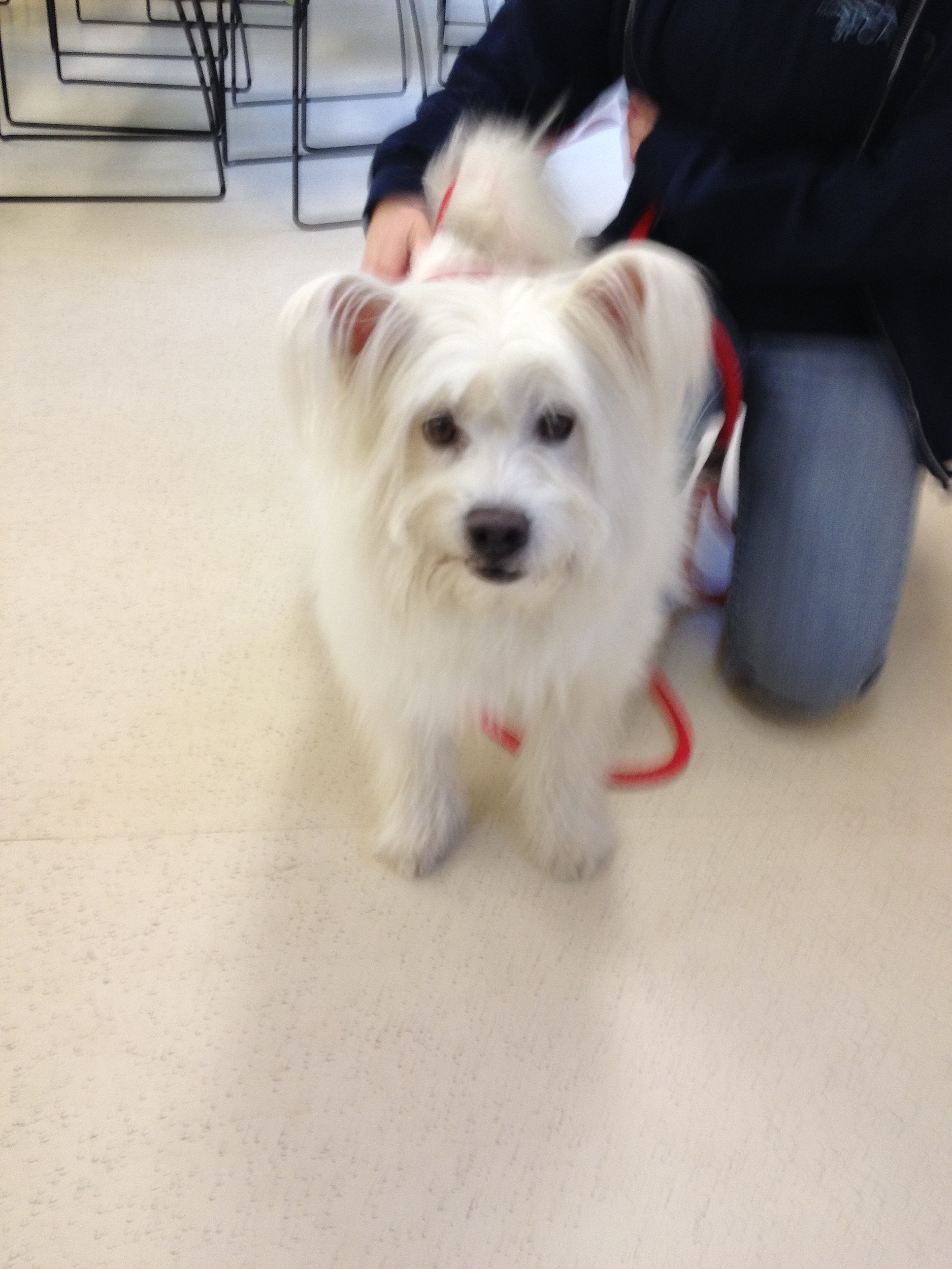 this dog at the spca in eatontown needs a home