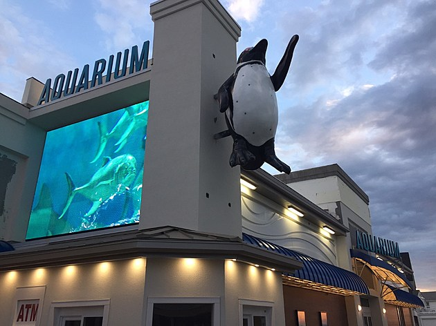 (The renevations are just about finished and look how beautiful the Jenkinson's Aquarium looks! Photo by Liz Jeressi)