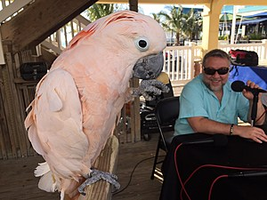 Parrot from Jenks and Lou Russo
