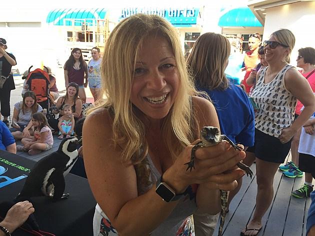 (Liz Jeressi holding a baby alligator)