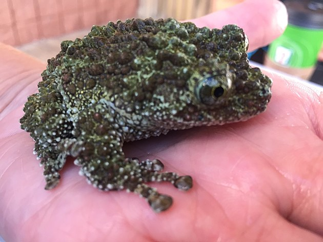 (Check out this Mossy Frog!)